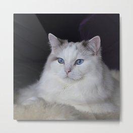 Ragdoll Cat Her Majesty Metal Print