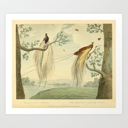 """""""The Greater Paradise Bird"""" from the collection of the Leverian Museum, 1790s Art Print"""