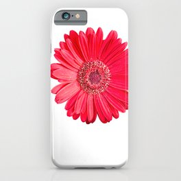isolated red gerbera daisy on white iPhone Case