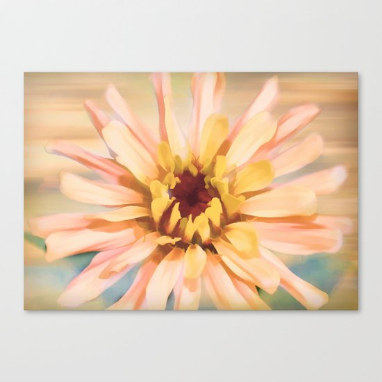 Sunset Zinnia Canvas Print