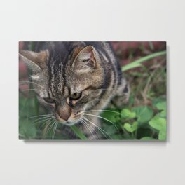 Outgoing cat 085 Metal Print