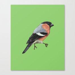 Bobby the Bullfinch Canvas Print