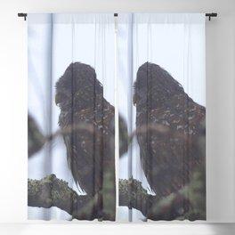 Watercolor Bird, Barred Owl 02, Okefenokee Swamp, Georgia Blackout Curtain