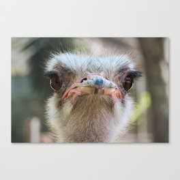 You looking' at me? Canvas Print