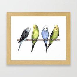 Parakeets Framed Art Print