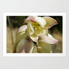 Open Bloom Art Print