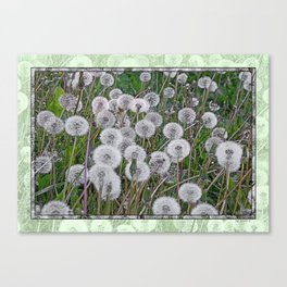 SEEDS OF DANDELION Canvas Print