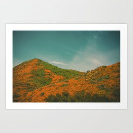 California Poppies 027 Art Print