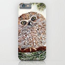 Baby Pygmy Owl iPhone Case