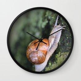 Snail 1 Wall Clock