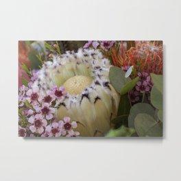 Beautiful Feather Protea Metal Print