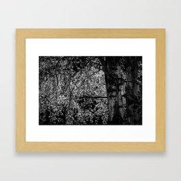 Birch in Black and White Framed Art Print