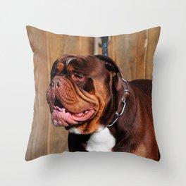 beautiful breed dog renascence bulldog Throw Pillow