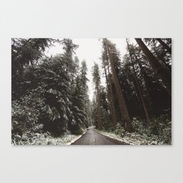 Redwood Forest Adventure II - Nature Photography Canvas Print
