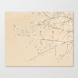 Winter Ice // Tree Branches Canvas Print