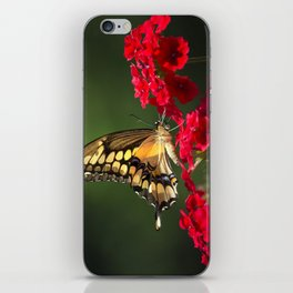 Giant Swallowtail Butterfly iPhone Skin
