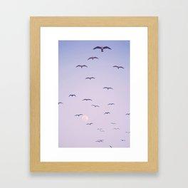 Seagulls & Moon by Murray Bolesta Framed Art Print