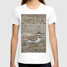 Concerned Killdeer T-shirt