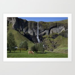 Horse in Iceland Art Print