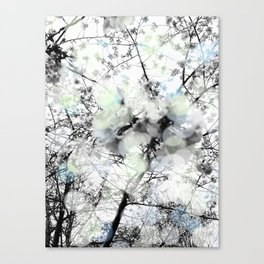 Black and white bokeh photography of a spring tree Canvas Print