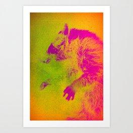 Le Raton Laveur Art Print