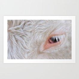 Cow's Eye Lash Art Print