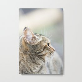 Cat face Metal Print