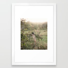 Apple Orchard Framed Art Print