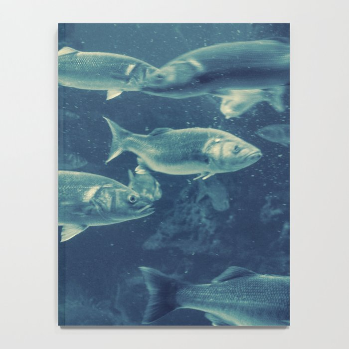 Fish 2 Notebook