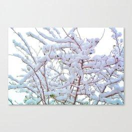 Spring Through the Snow Canvas Print