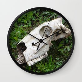Skull in a field, Photography, animal skull Wall Clock