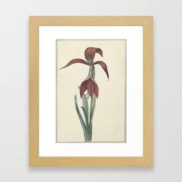 Amaryllis formosissima, CJ Crumb, 1817 Framed Art Print