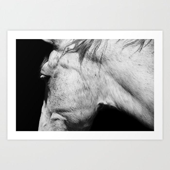 Casper | Animals | Horse Photography | black-white | nature Kunstdrucke