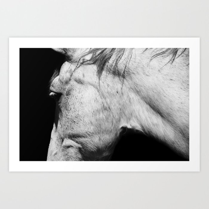 Casper animals horse photography black white nature art print