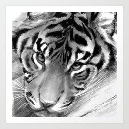Tiger - Black and White Art Print