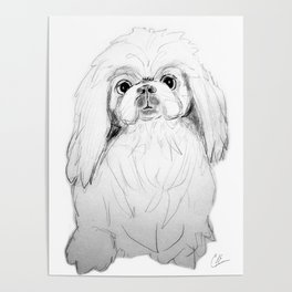 Cartoon Pekingese Dog Poster