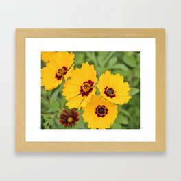 Yellow And Maroon Centers Framed Art Print