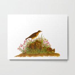 Prairie Titlark Bird Metal Print