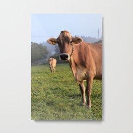 Cows in a Field Metal Print