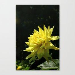 Yellow Passion Canvas Print