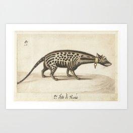 Civet, anonymous, c. 1572 Art Print