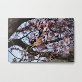 Spring Blossoms - Male House Finch Metal Print