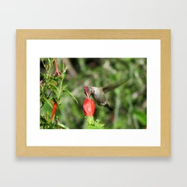Hummingbird and The Flower Framed Art Print