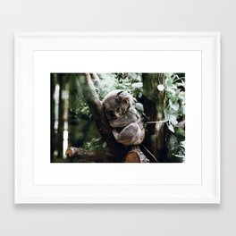 Sleeping Koala Framed Art Print