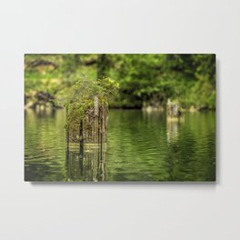 Lonely pine sprout on an old tree trunk in a lake Metal Print