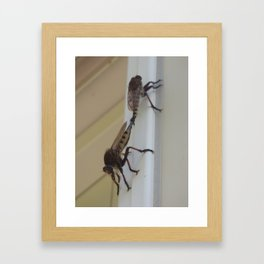robber flies in love V Framed Art Print