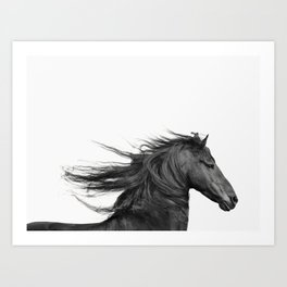 Wild - Horse Photography in Black and White Art Print