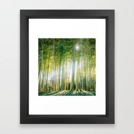 Japanese Bamboo Forest Fine Art Print Framed Art Print
