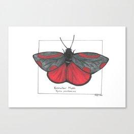 Cinnabar Moth Canvas Print