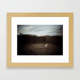 A Dog in Arizona Framed Art Print